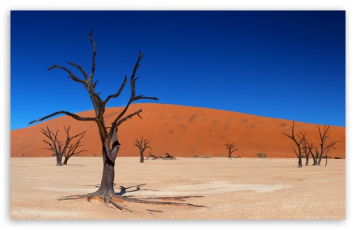 Download Desert Trees UltraHD Wallpaper