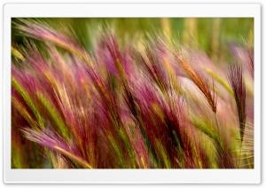 Field Grass Close Up