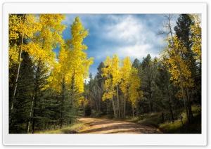 Autumn Drive in Colorado