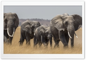 Maasai Mara Safari Tour