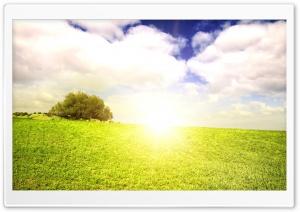 Bright Sunlight