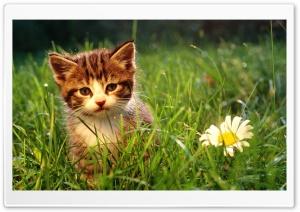 Cute Kitten Near A Flower
