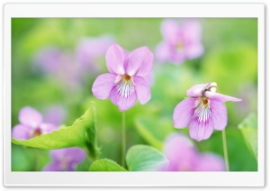 Small Pink Flowers
