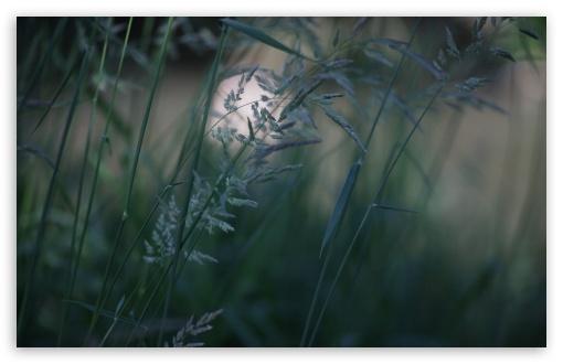 Download Grass Photo UltraHD Wallpaper