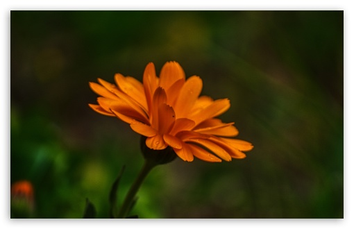 Download Flower of the Day UltraHD Wallpaper