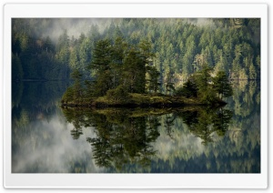 Island With Pines In The Lake