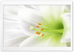White Lily, Easter Flower