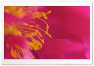Flower Stamens, Macro