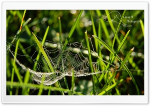 Dainty Spider Web