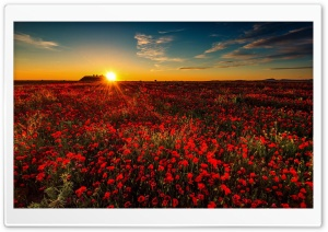 Summer, Field, Flowers