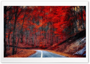 Red Trees - Road