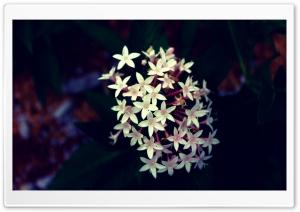 Flowers Close Up Shoot