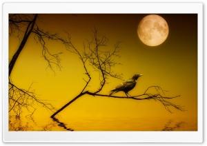 Bird Sitting Under Full Moon