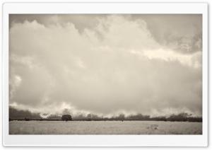 Tree, Field, Landscape, Low...
