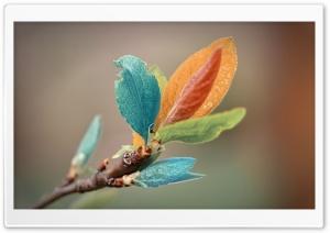 Spring Leaves Macro
