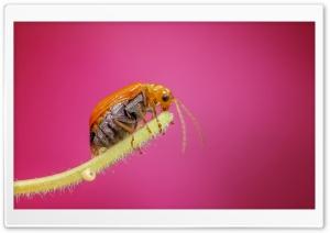 Amazing Macro Insect 1