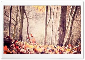 Ground Leafage, Autumn