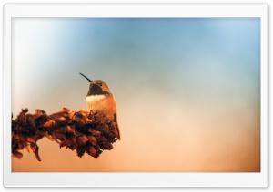 Hummingbird, Autumn