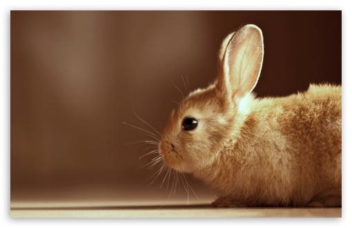 Download Bunny UltraHD Wallpaper