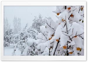 Snow Covered Peach Tree