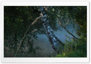 Poranek, Rzeka I Drzewa