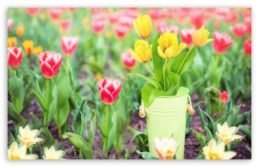 Download Spring Garden Flowers UltraHD Wallpaper