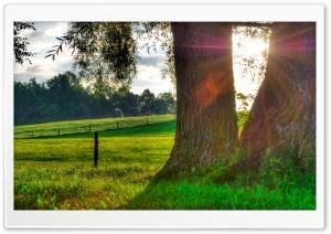 Morning Light, Summer
