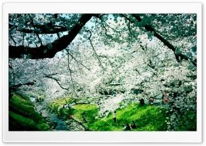 Wonderful Spring Day