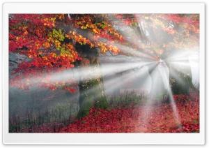 Sunbeams, Mist, Forest, Autumn