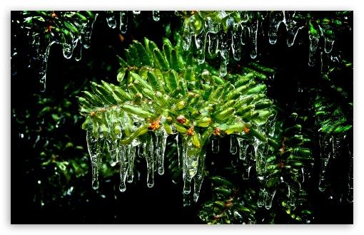 Download Frozen Tree UltraHD Wallpaper