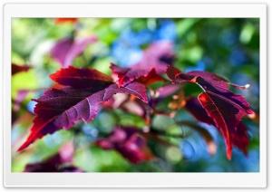 Purple Leaves Macro