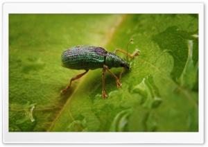 Green Bug On A Leaf