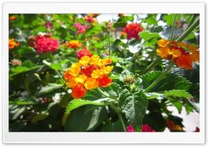 Flower Beautiful-Ali Malekpour