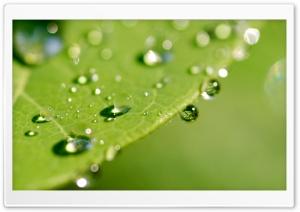 Green Wet Leaf, Macro