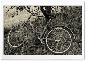Bicycle Under The Cherry Tree