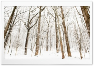 Forest Trees, Snow, Winter
