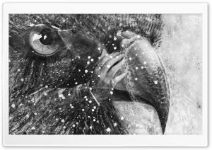 Bird Art Black and White