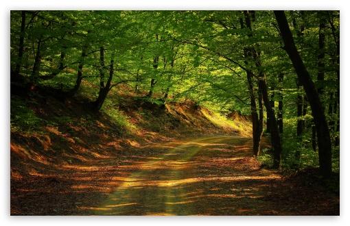 Download Forest Road, Summer UltraHD Wallpaper