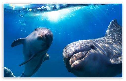 Download Dolphins Underwater UltraHD Wallpaper