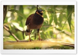 Agressive Bird