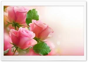 3 Light Pink Roses