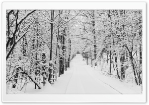 Snowy Trees, Rural Road, Winter