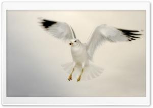 White Seagull Landing
