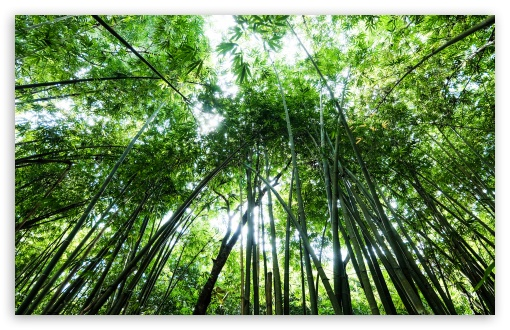 Download Bamboo UltraHD Wallpaper