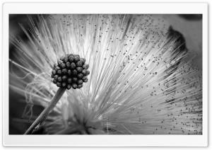 Fluffy Flower Black And White