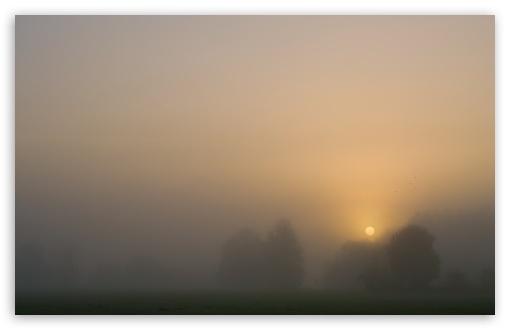 Download Foggy Day UltraHD Wallpaper