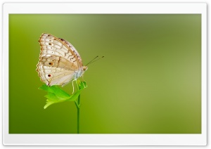 Butterfly Green Background