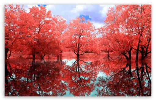 Download Red Creek UltraHD Wallpaper