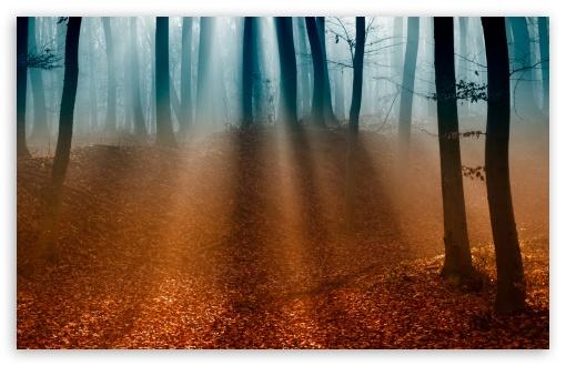 Download Autumn Forest UltraHD Wallpaper