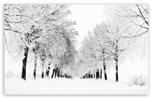 Download Winter Season UltraHD Wallpaper